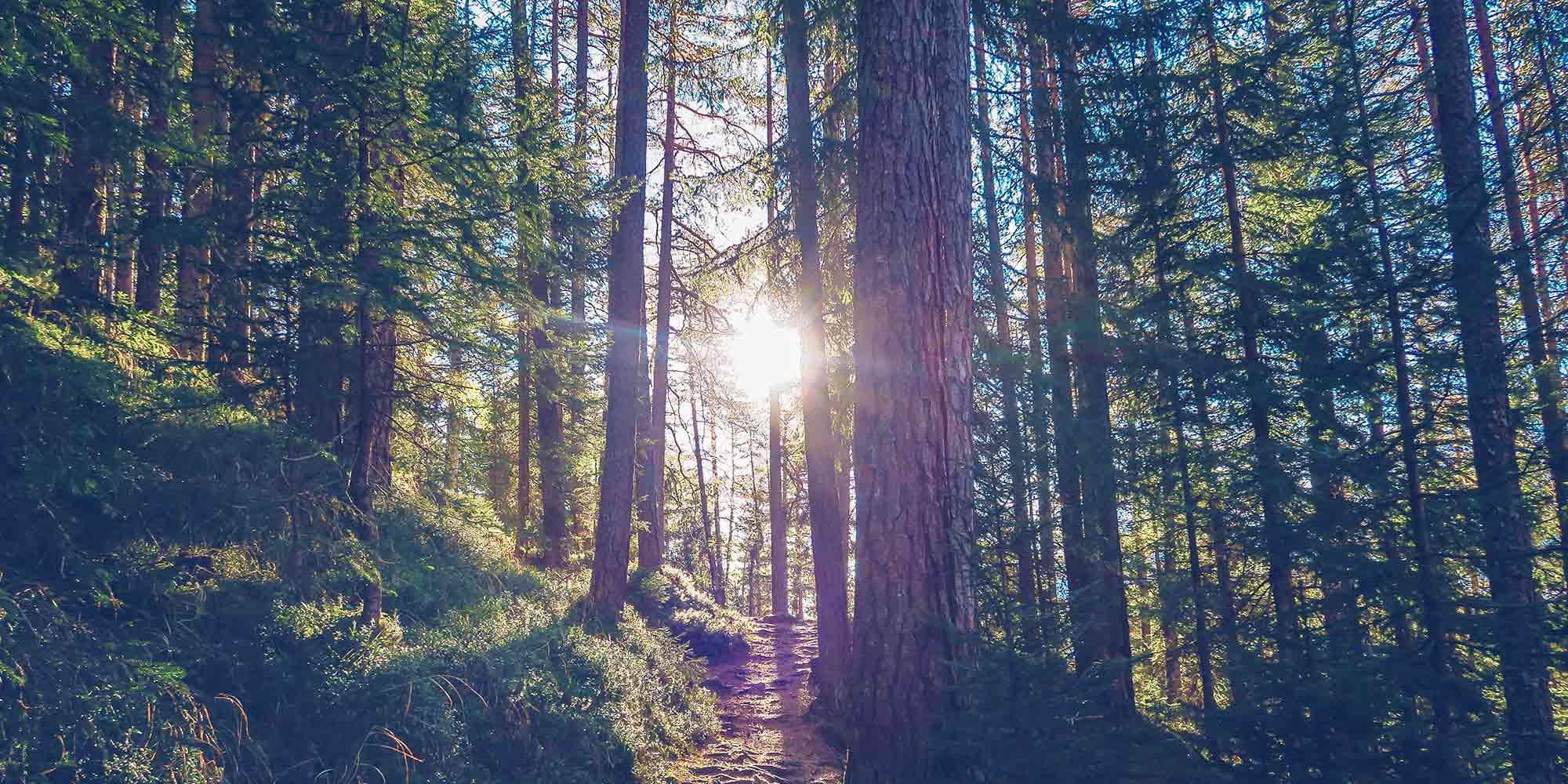 Stromproduzierende Heizung: umweltfreundliches und sparsames Energiesystem