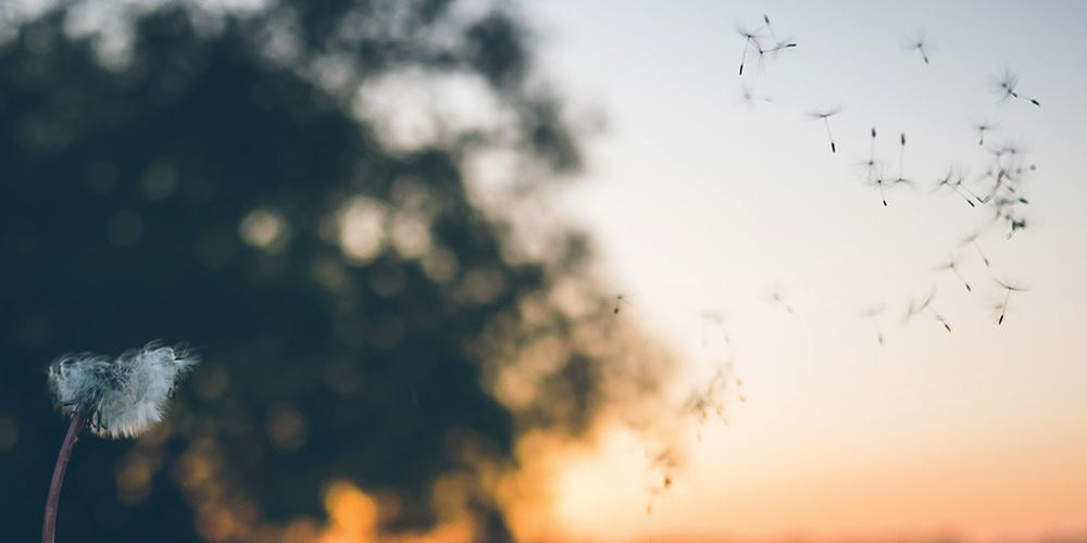 Luftwärmepumpen bedienen sich natürlicher Ressource